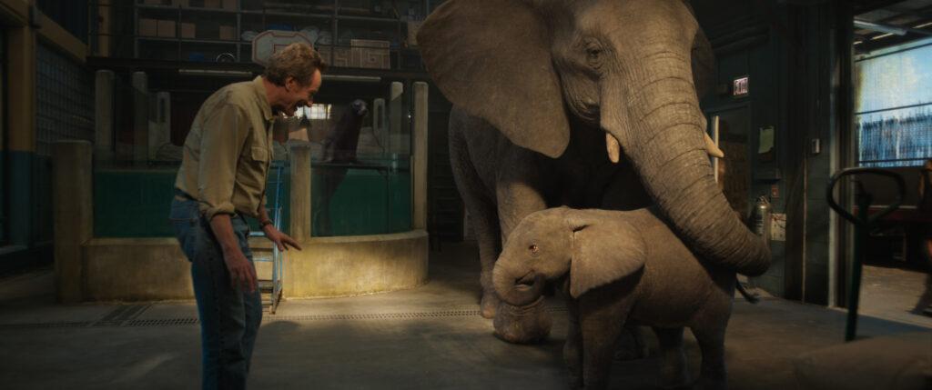 Bryan Cranston como Mack, Stella (Angelina Jolie) y Ruby (Brooklynn Prince) en 'El Magnífico Iván'. (Fuente: Disney+)